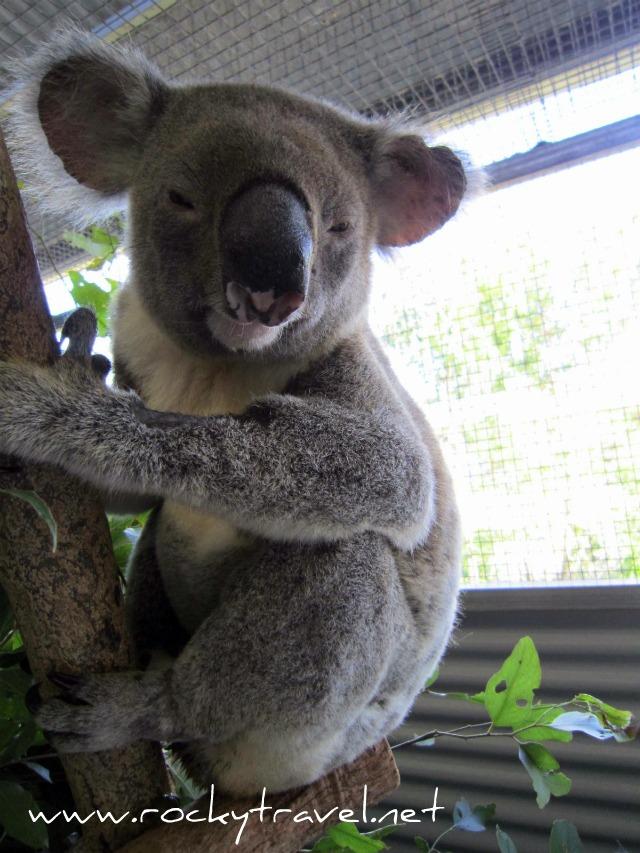 KoalaFlyBoy