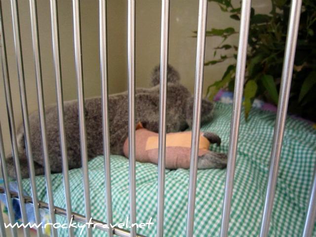 KoalaICU