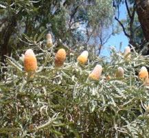 australia-nature-3