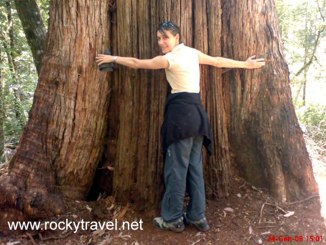 giantgumtree21
