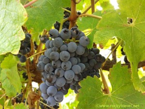 From Vines to Wine in Margaret River