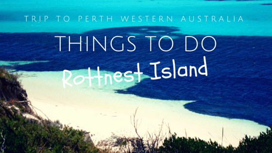 10 Things To Do On Rottnest Island On A Day Tour