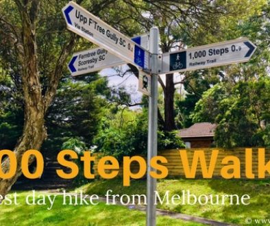 1000 Steps Walk in the Dandenongs - Best Day Hike from Melbourne