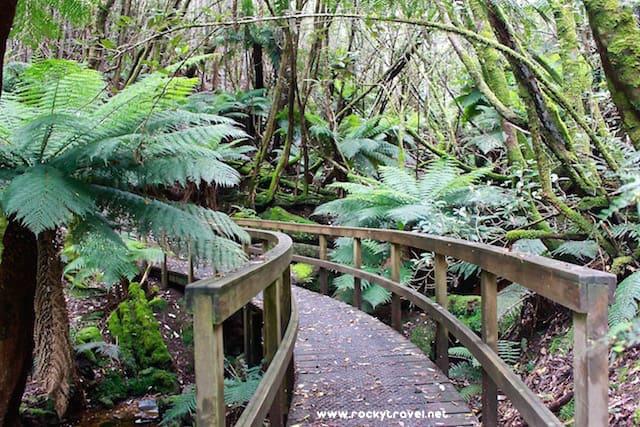 Mount Wellington Walks from Fern Tree Hobart